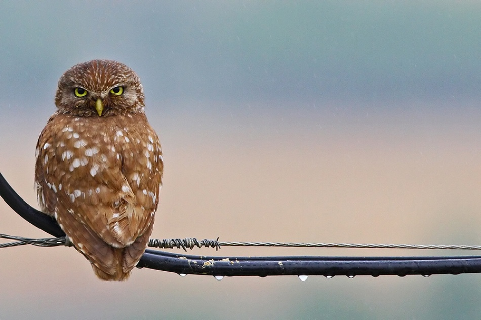 A piece of fine art art photography titled Pretty Little Angry Man by Volkan Donbaloglu