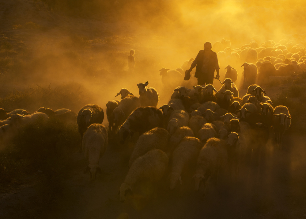 A piece of fine art art photography titled Herd and Shepherd by feyzullah tunc