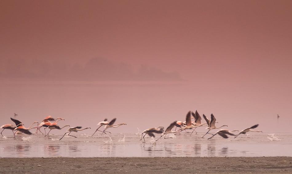 A piece of fine art art photography titled Flamingo by Alexander Maslarski