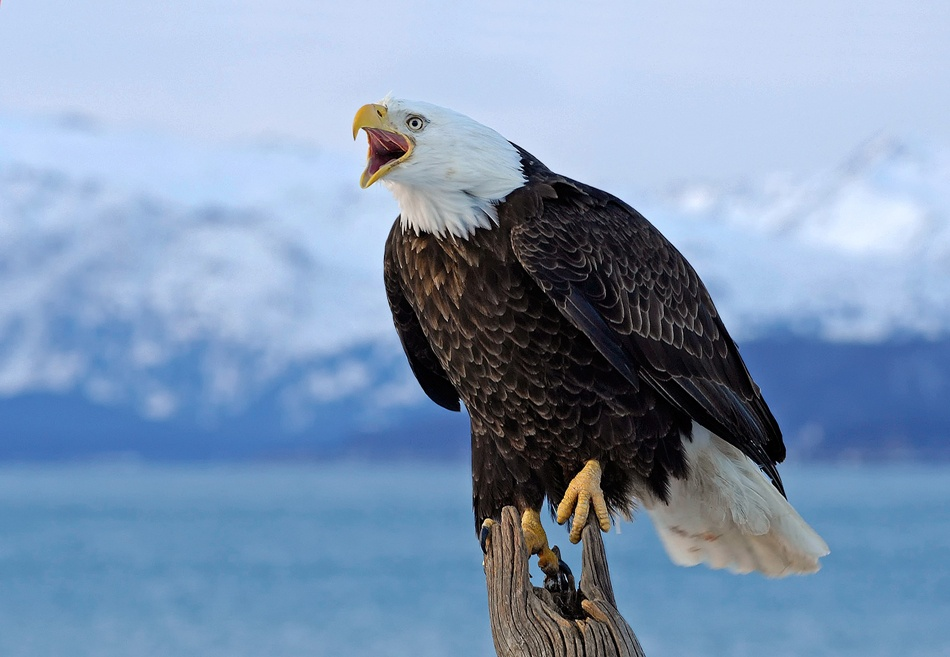 A piece of fine art art photography titled Bawler II by Harry Eggens