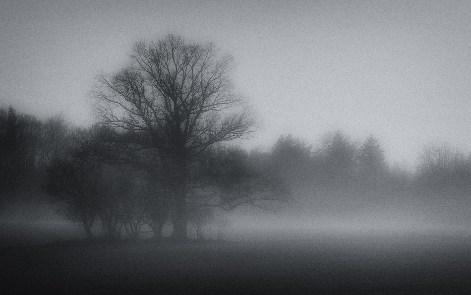 A piece of fine art art photography titled November by Norbert Maier