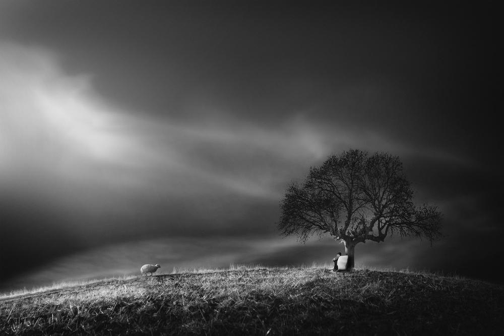 A piece of fine art art photography titled Shepherd by Yasemin Bakan
