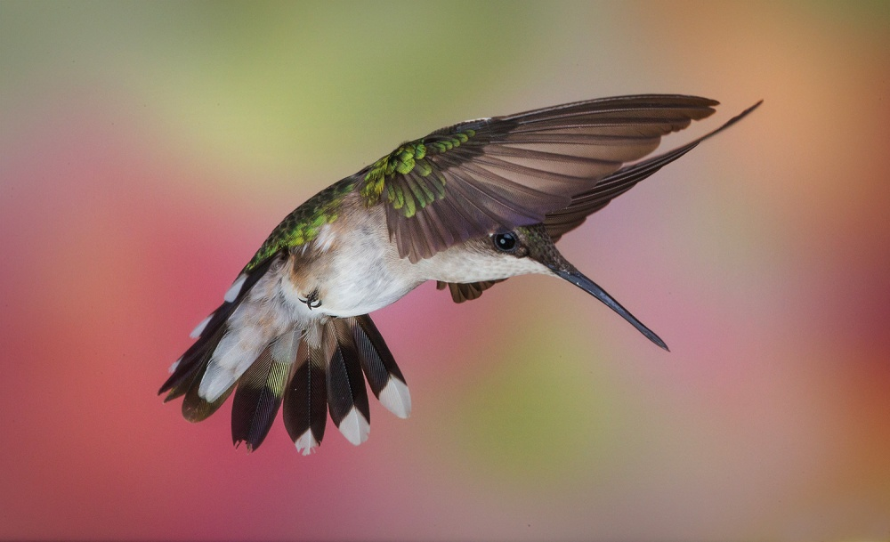 A piece of fine art art photography titled Frozen Hummer by Christopher Schlaf