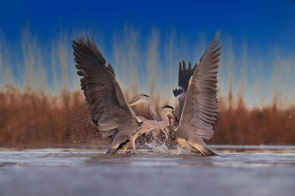 A piece of fine art art photography titled Dancing by Phillip Chang