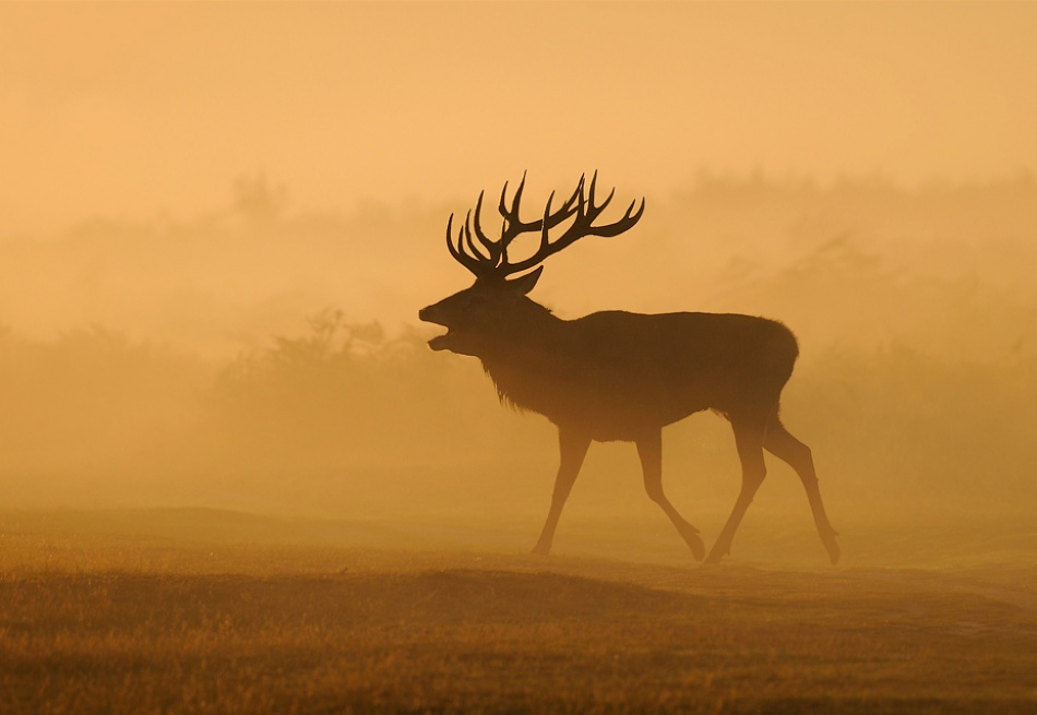 A piece of fine art art photography titled Misty Stag by Brian Scott
