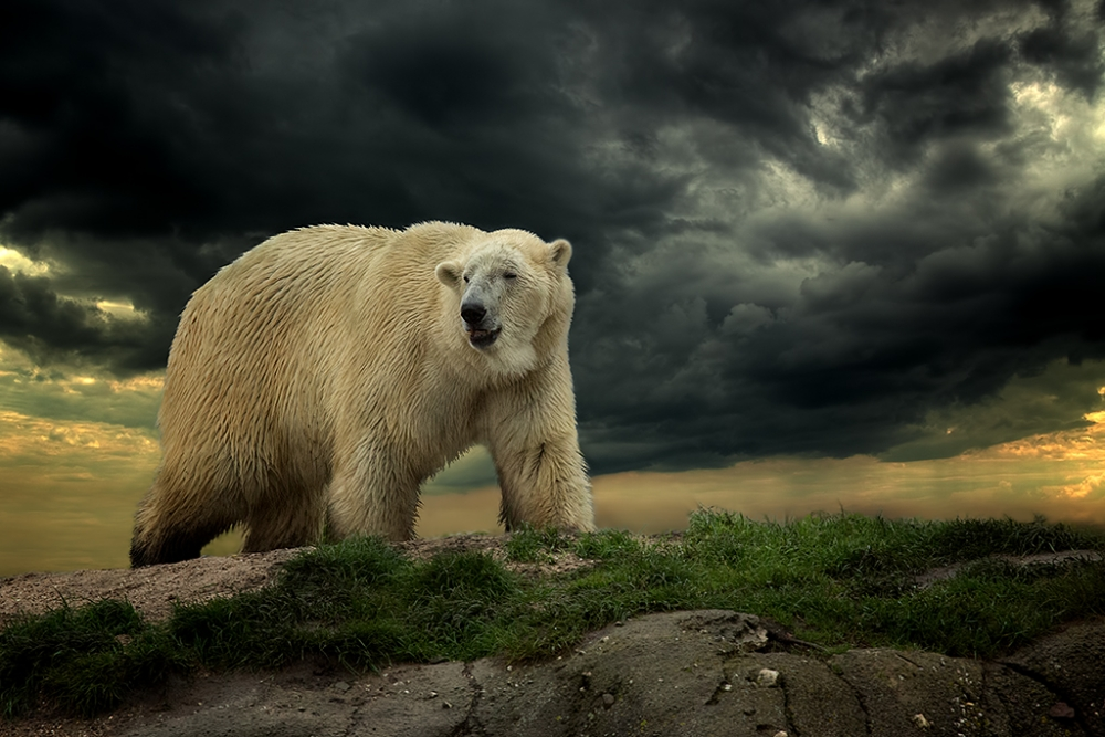 A piece of fine art art photography titled The Lost World by Peter Reijners