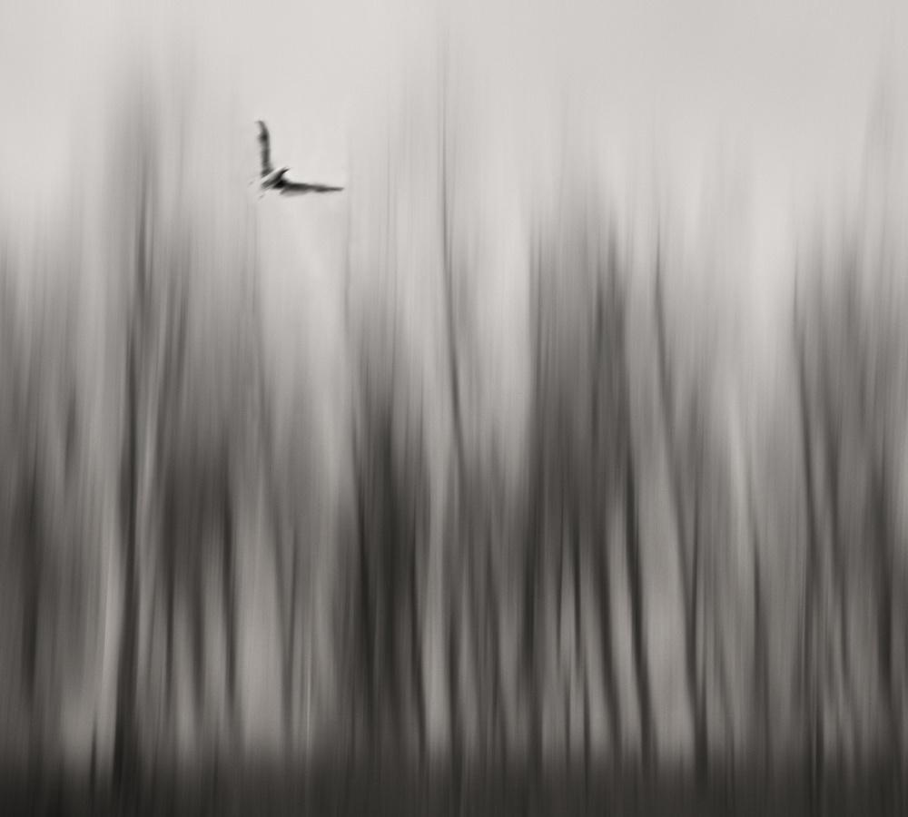 A piece of fine art art photography titled Winter Flight by Yvette Depaepe