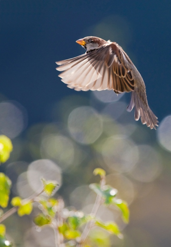 A piece of fine art art photography titled In Flight by Øystein Rye Eriksen