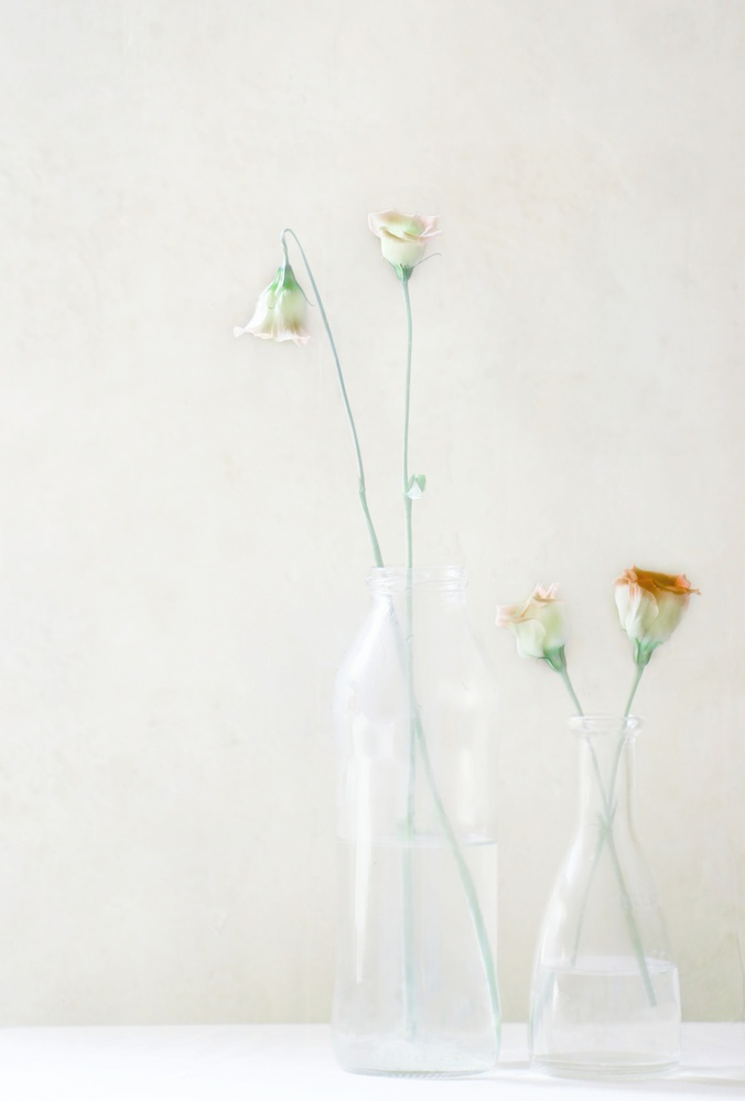 A piece of fine art art photography titled Simplicity and Elegance by Delphine Devos