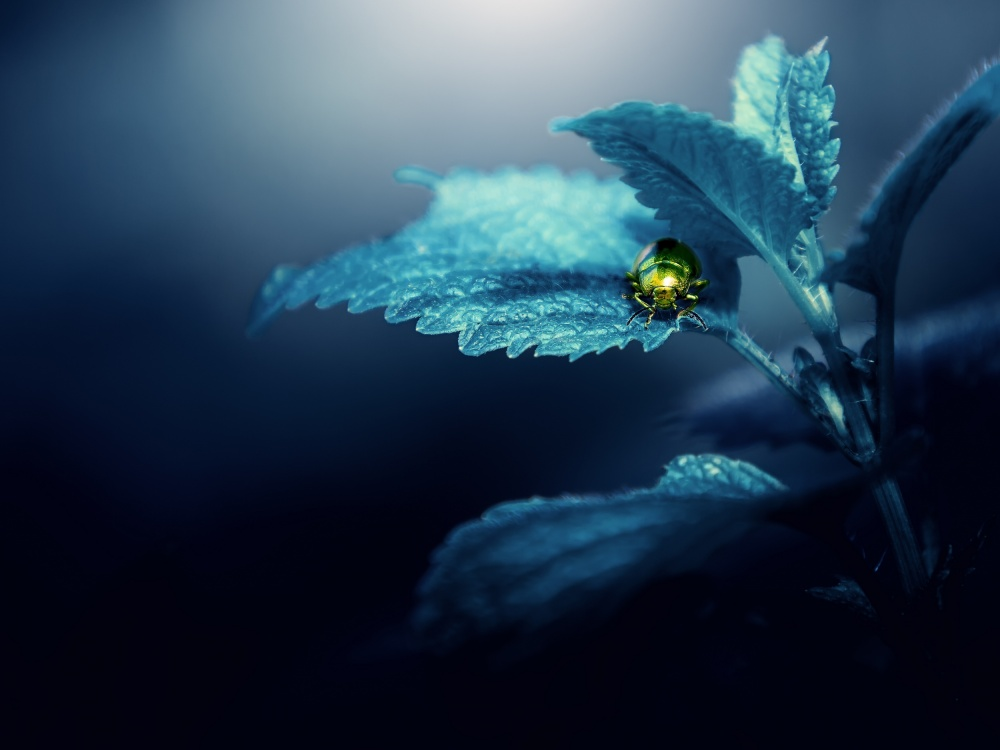 A piece of fine art art photography titled Avatar - NAture 2 by Kristian Potoma