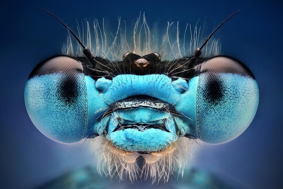 A piece of fine art art photography titled Blue by Dusan Beno