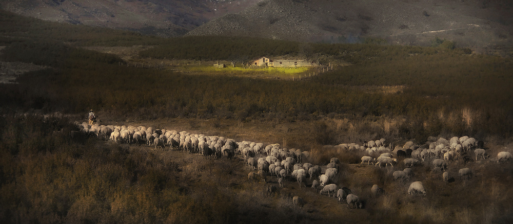 A piece of fine art art photography titled Flock by Amador Funes
