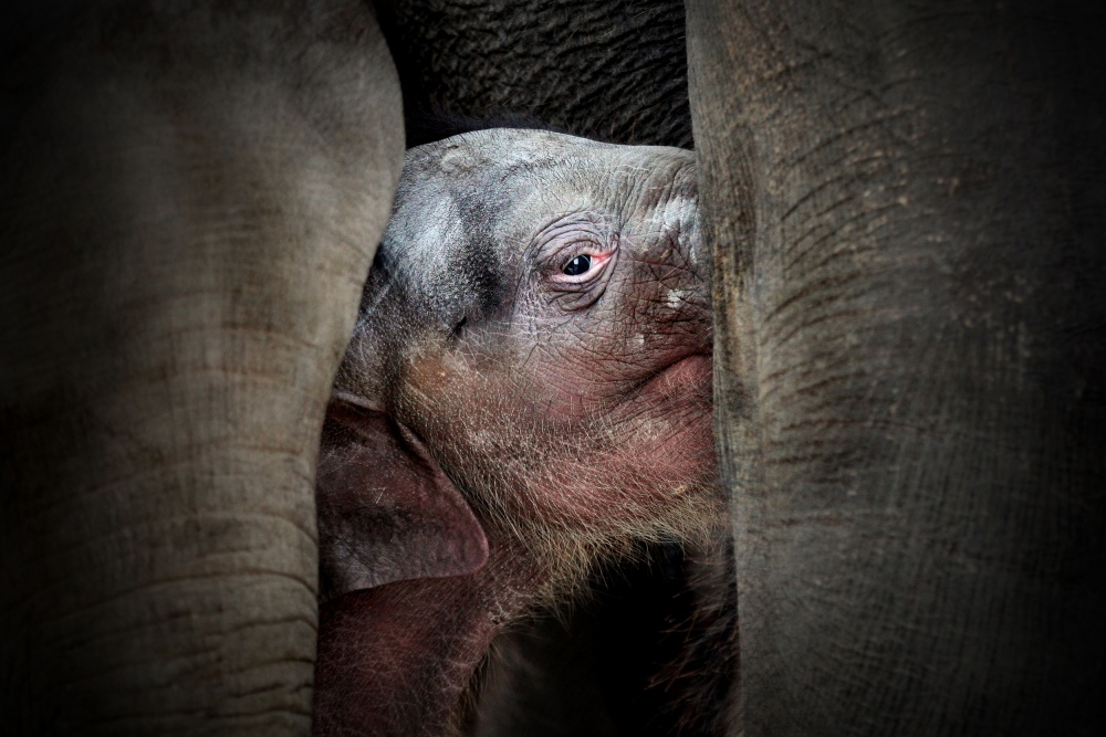 A piece of fine art art photography titled The Immemorial Knowledge of the Newborns by Antje Wenner-Braun