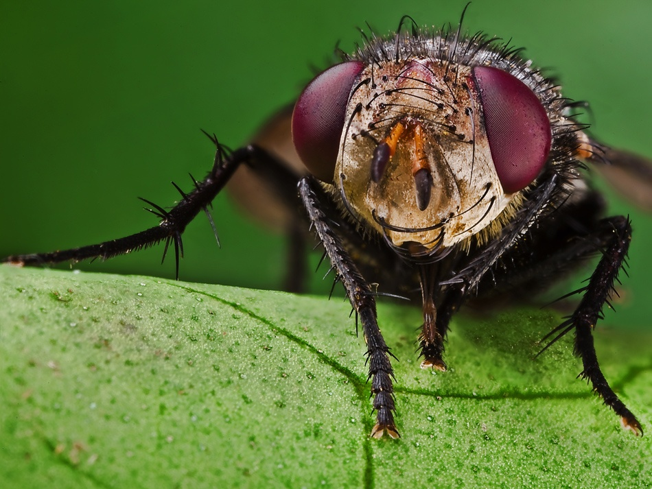 A piece of fine art art photography titled The Fly (A Full Version) by M.Alkhamis