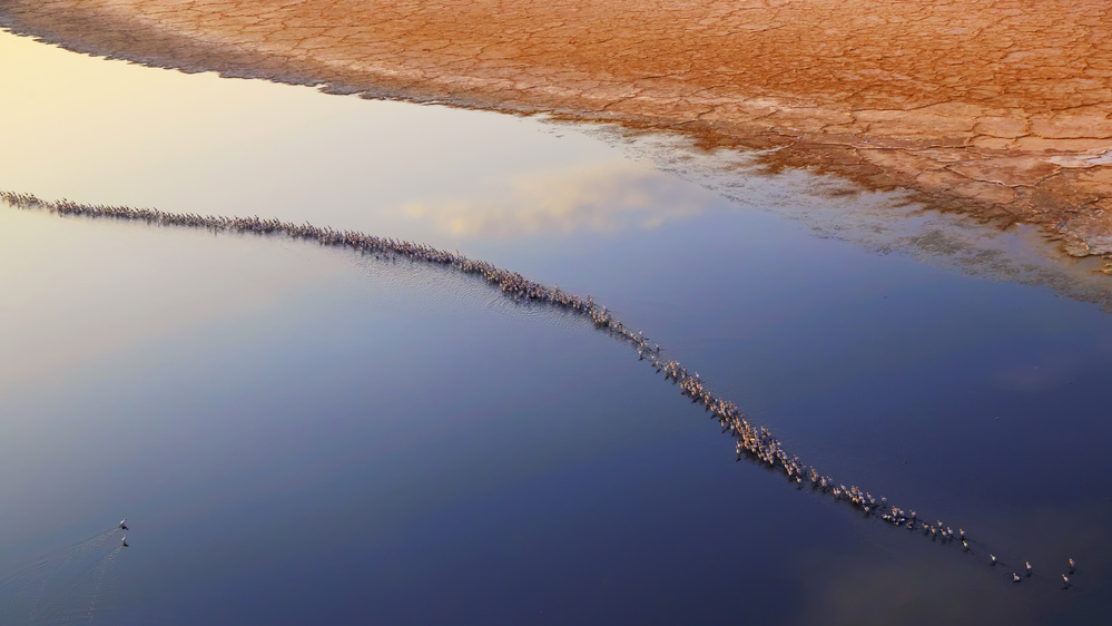 A piece of fine art art photography titled I Can Not Fly by Phillip Chang