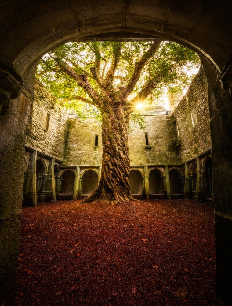 """""""Muckross Abbey - Tree of Life"""""""