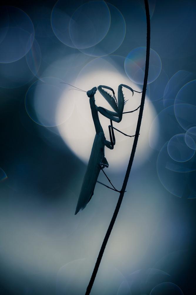 A piece of fine art art photography titled MOOn Dreamer by Alberto Di Donato