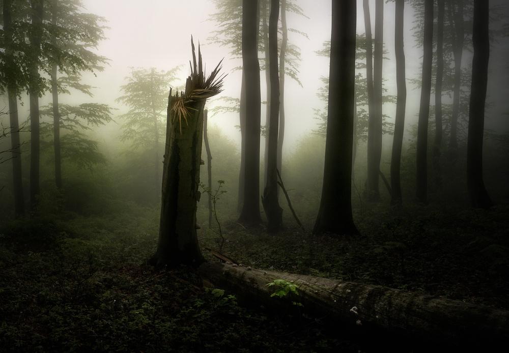 A piece of fine art art photography titled Untitled by Veselin Atanasov