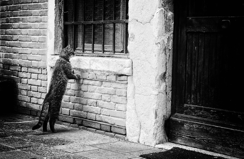 A piece of fine art art photography titled The Cat by Izabella Végh