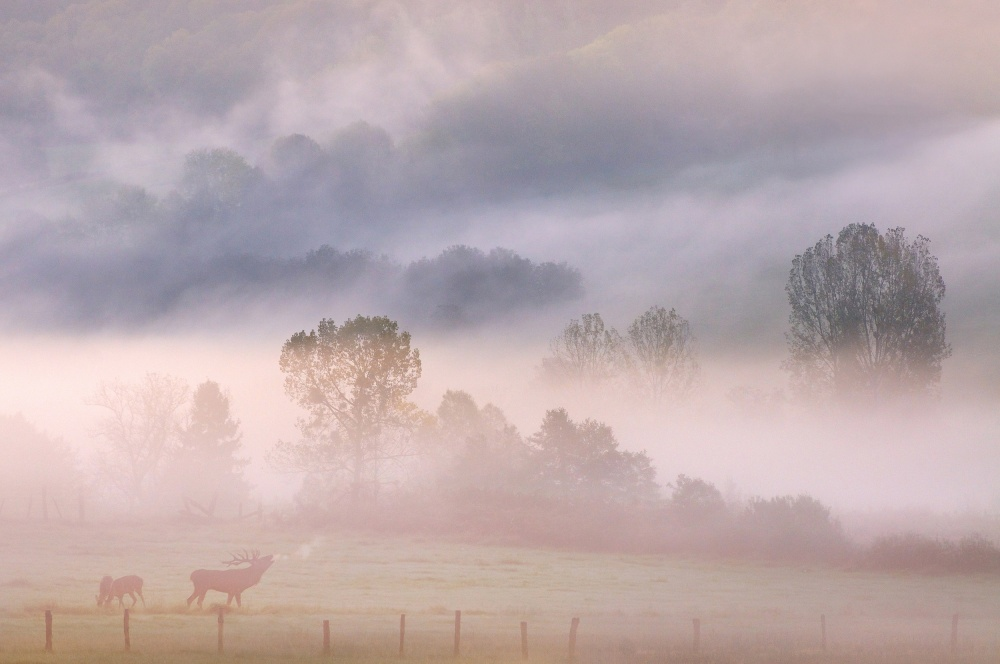 A piece of fine art art photography titled Call of the Deer In De Mist by Muriel Vekemans