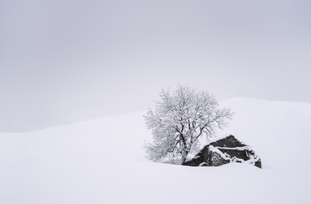 A piece of fine art art photography titled In the Snow by Giorgio Toniolo
