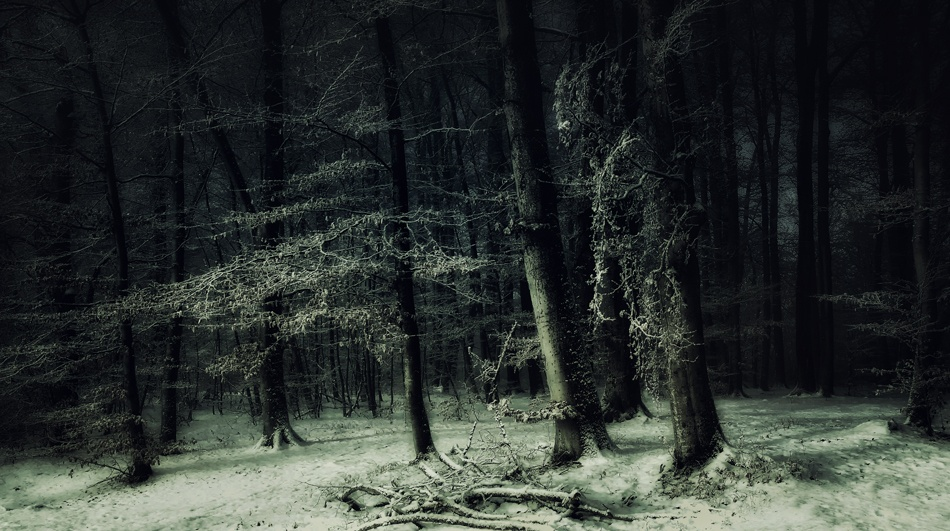 A piece of fine art art photography titled Dedicated to Ivan Shishkin by Norbert Maier