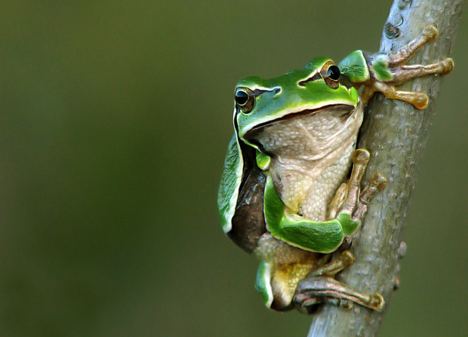 A piece of fine art art photography titled Hyla Arborea by Victor Minghir