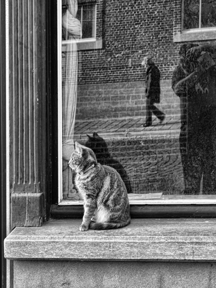 A piece of fine art art photography titled The Cat, the Lady and  by Luis Bonito