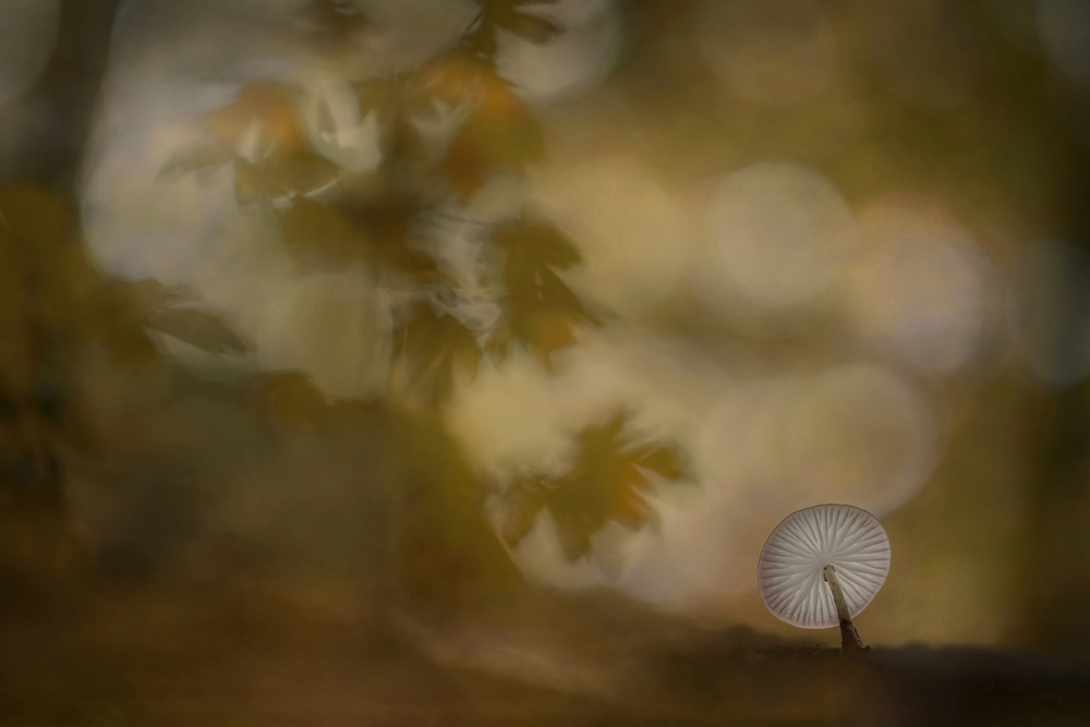 A piece of fine art art photography titled Autumn Atmosphere by Nel Talen