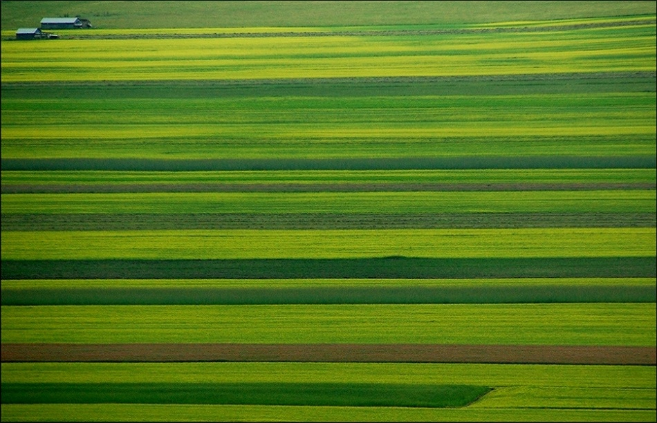 A piece of fine art art photography titled Impressions of Green by Riccardo Monaco
