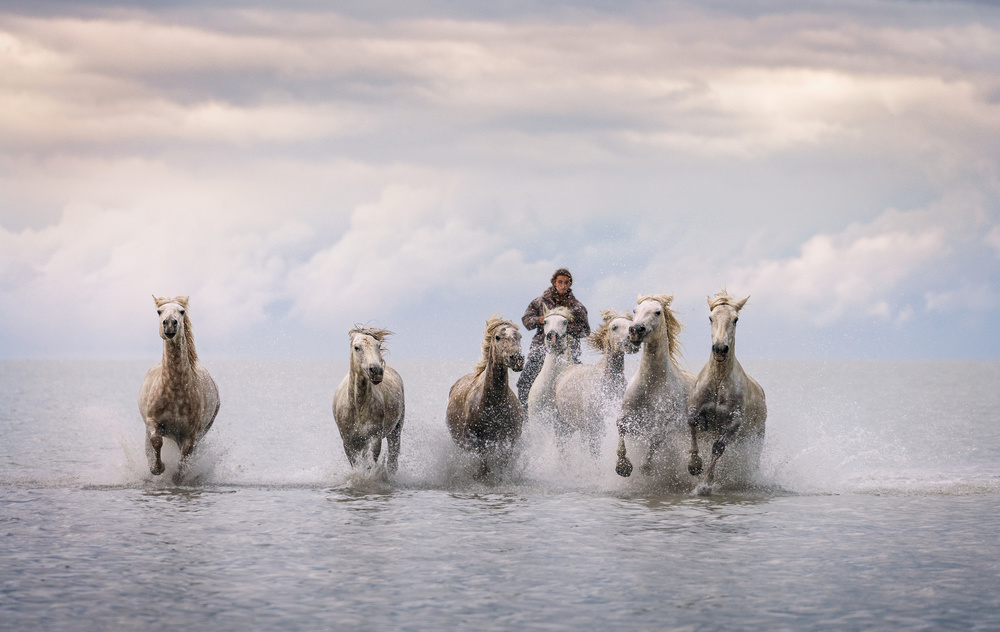 A piece of fine art art photography titled Camargue Horses by Antoni Figueras