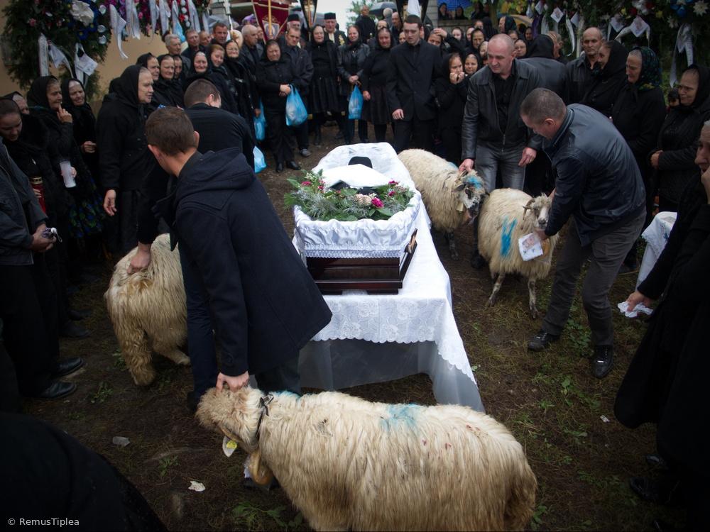 shepherd's death