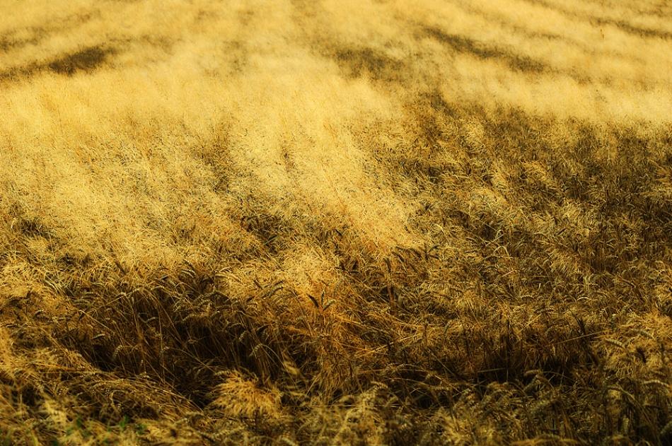 A piece of fine art art photography titled Golden Waves by Jure Kravanja