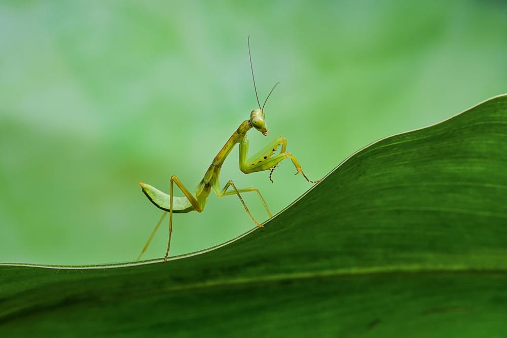 A piece of fine art art photography titled Mantis by Xióng Lù