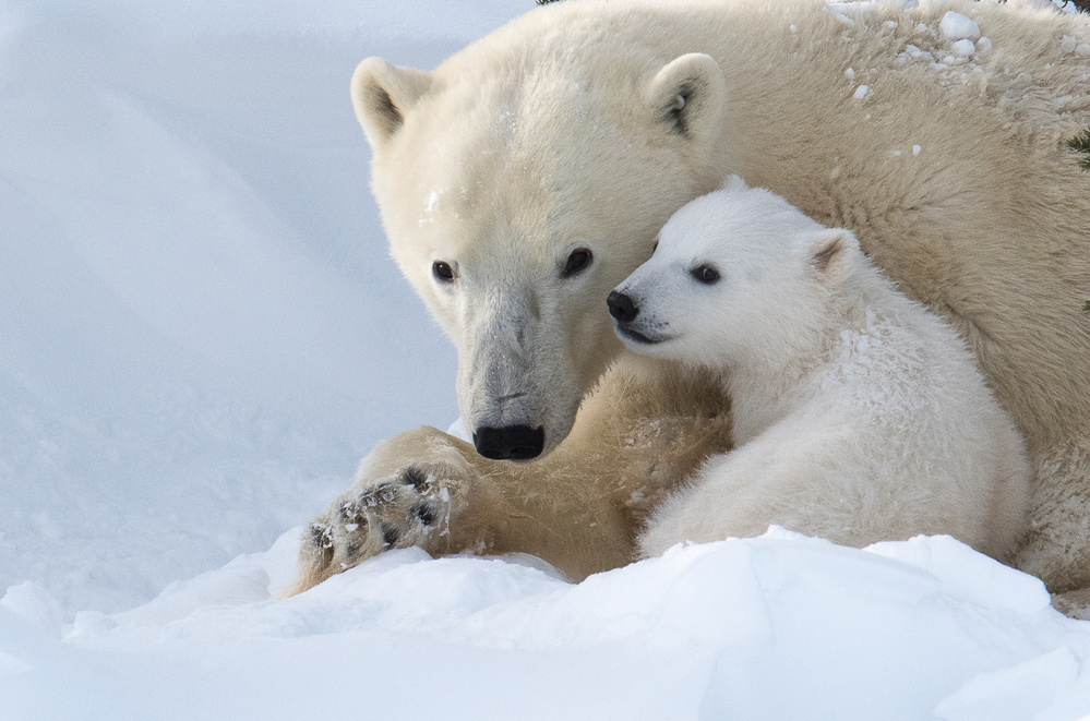View this piece of fine art photography titled Love my mommy! by Petr Simon