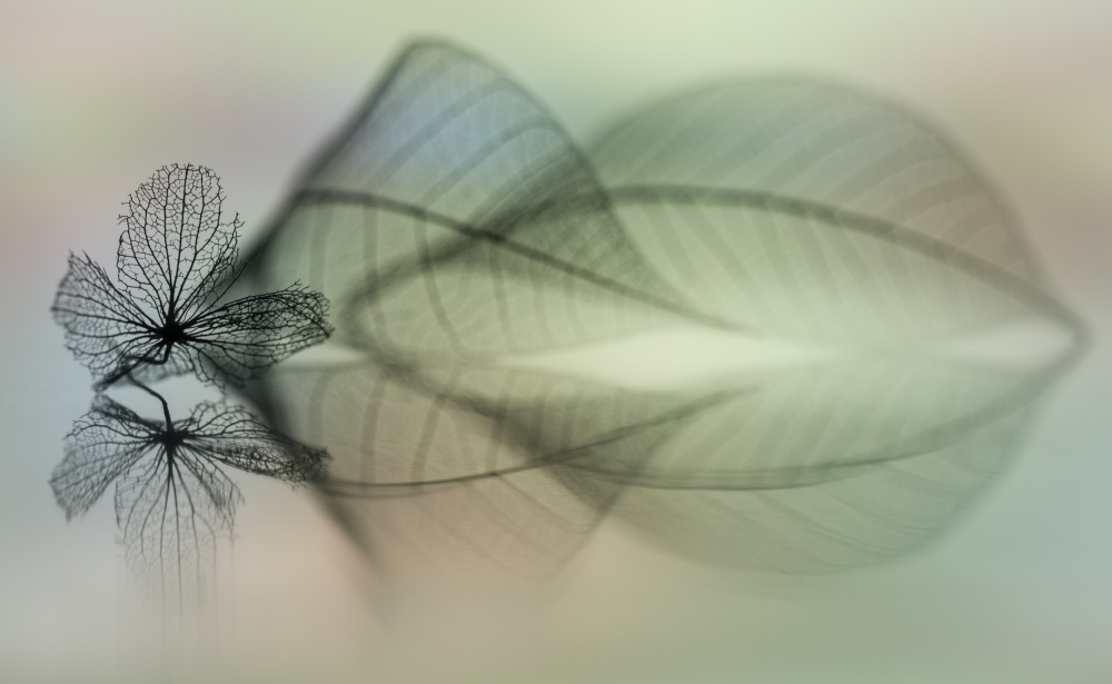 A piece of fine art art photography titled Duet by Shihya Kowatari
