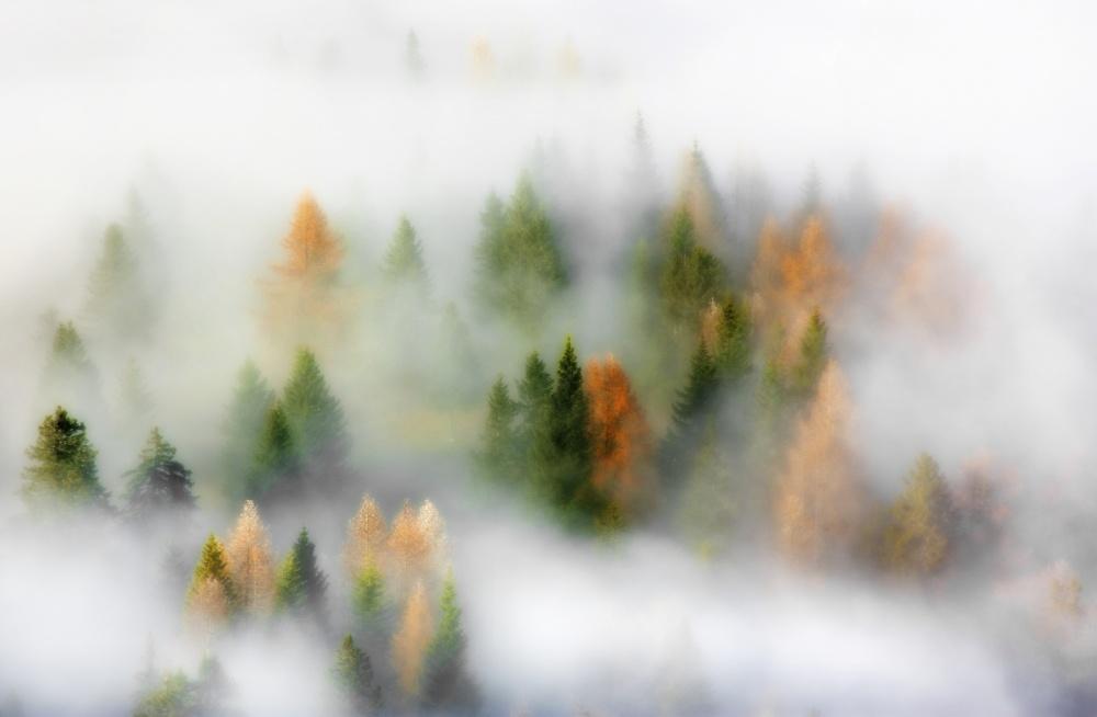 A piece of fine art art photography titled Autumn Dream by Kristjan Rems
