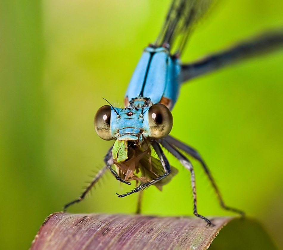 A piece of fine art art photography titled A Damsel's Feast by Trevor Nichols