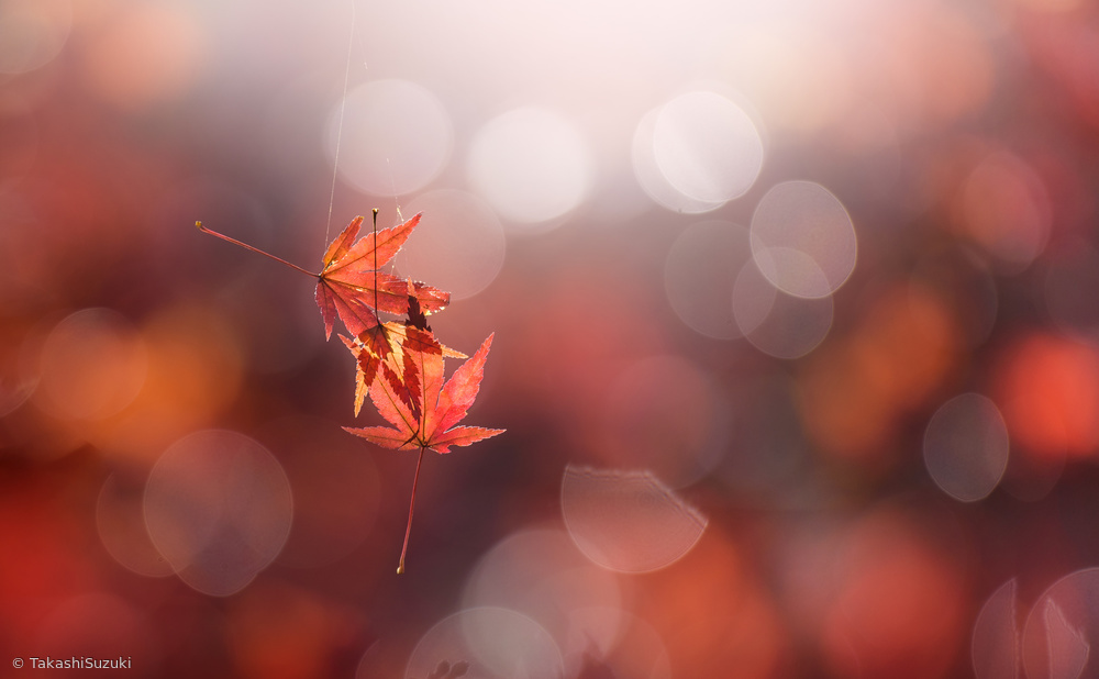 View this piece of fine art photography titled In the light by Takashi Suzuki