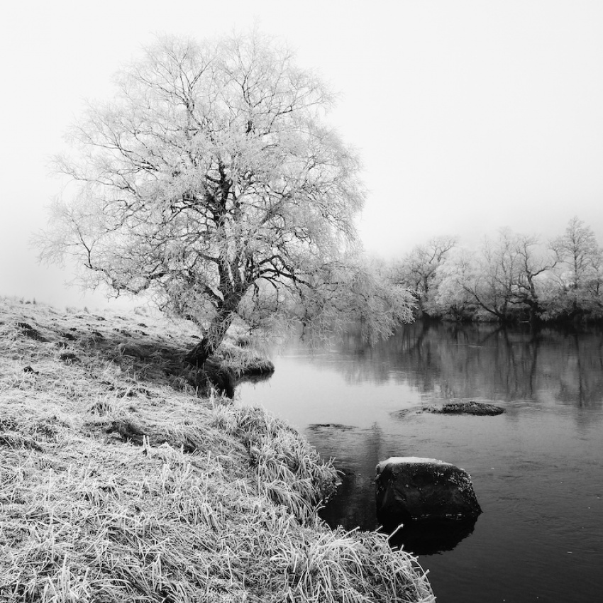 A piece of fine art art photography titled White Tree by mike tamanawis