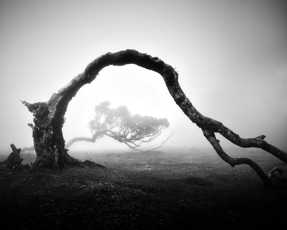 View this piece of fine art photography titled Fanal IV by Anton van Dongen