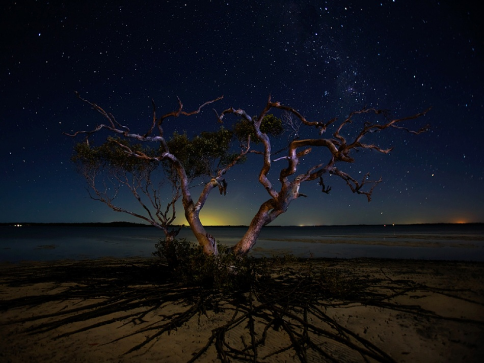 A piece of fine art art photography titled The Tree by Mel Brackstone