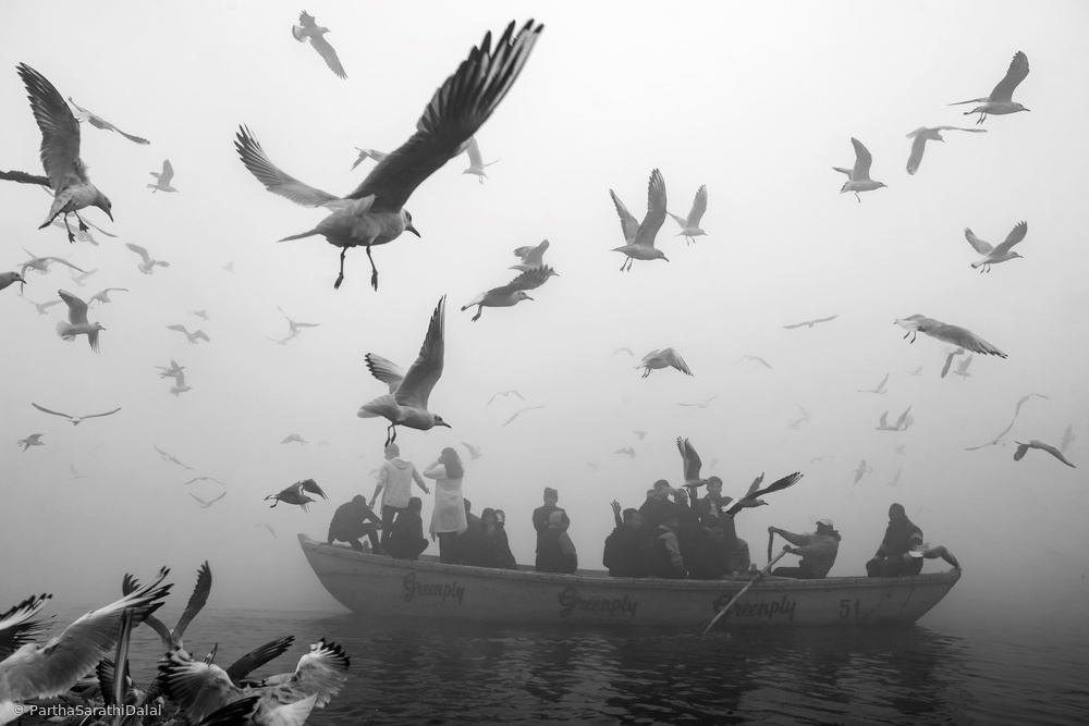 View this piece of fine art photography titled World of birds by Partha Sarathi Dalal