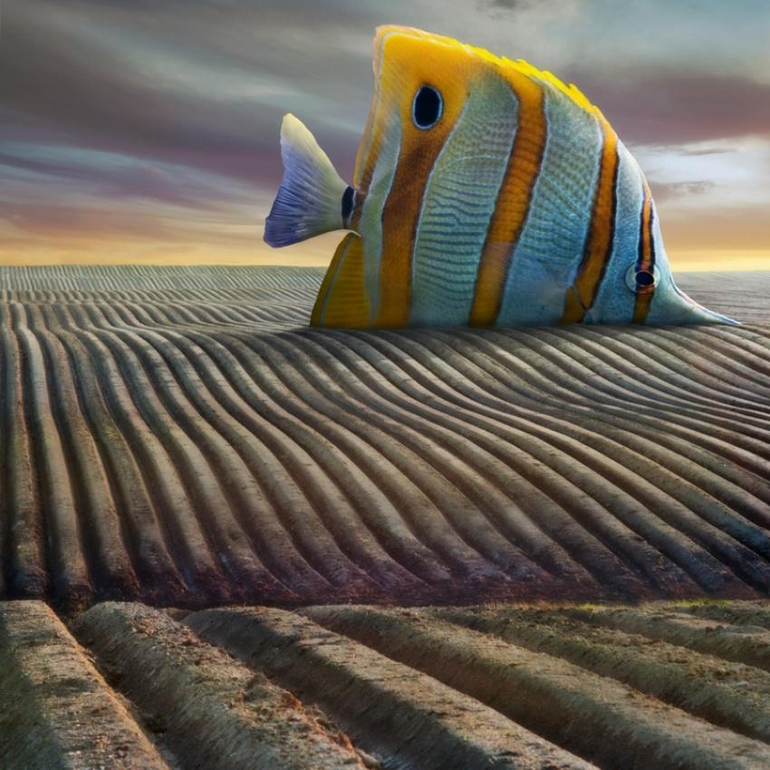 A piece of fine art art photography titled Big Fish by Dariusz Klimczak