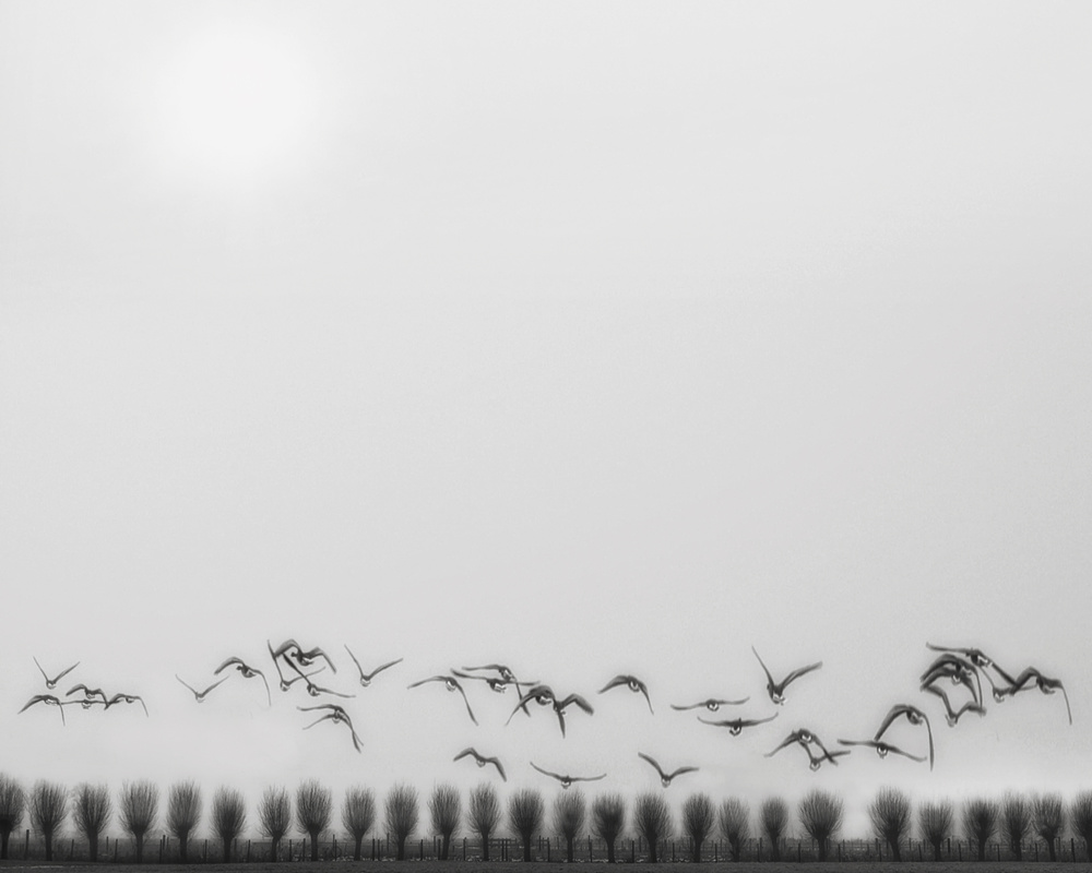A piece of fine art art photography titled Seagulls Over the Fields by Yvette Depaepe