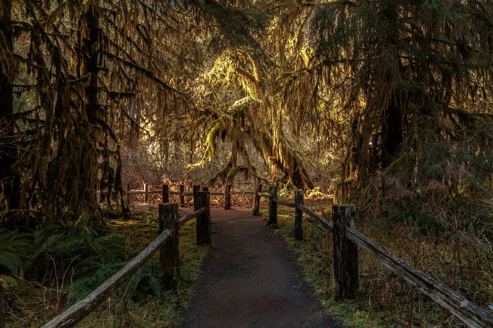 A piece of fine art art photography titled Hall of Moss by Francois Roughol