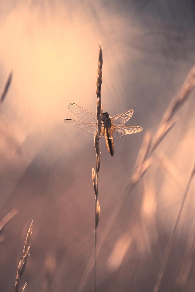 A piece of fine art art photography titled Divine Light by Fabien BRAVIN