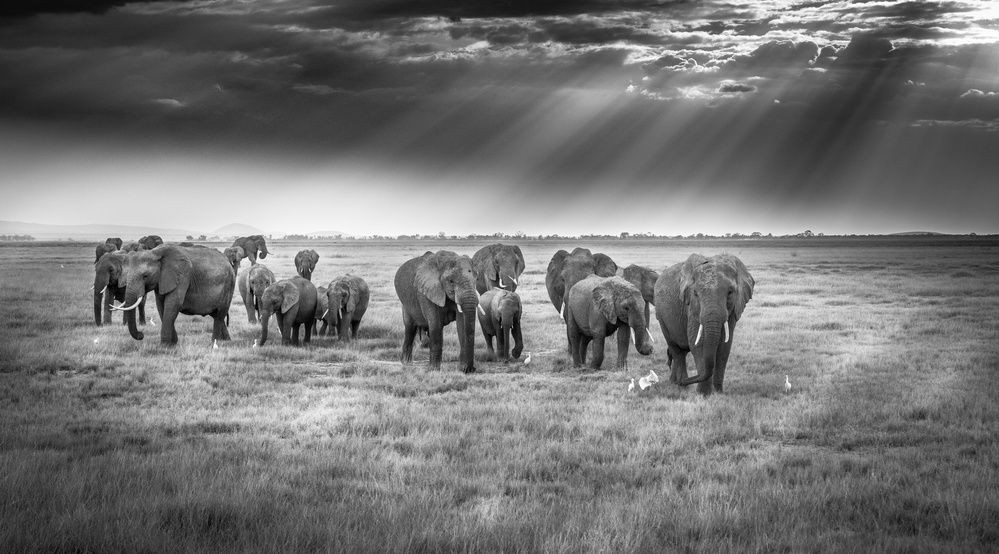 Breakfast with pachyderms