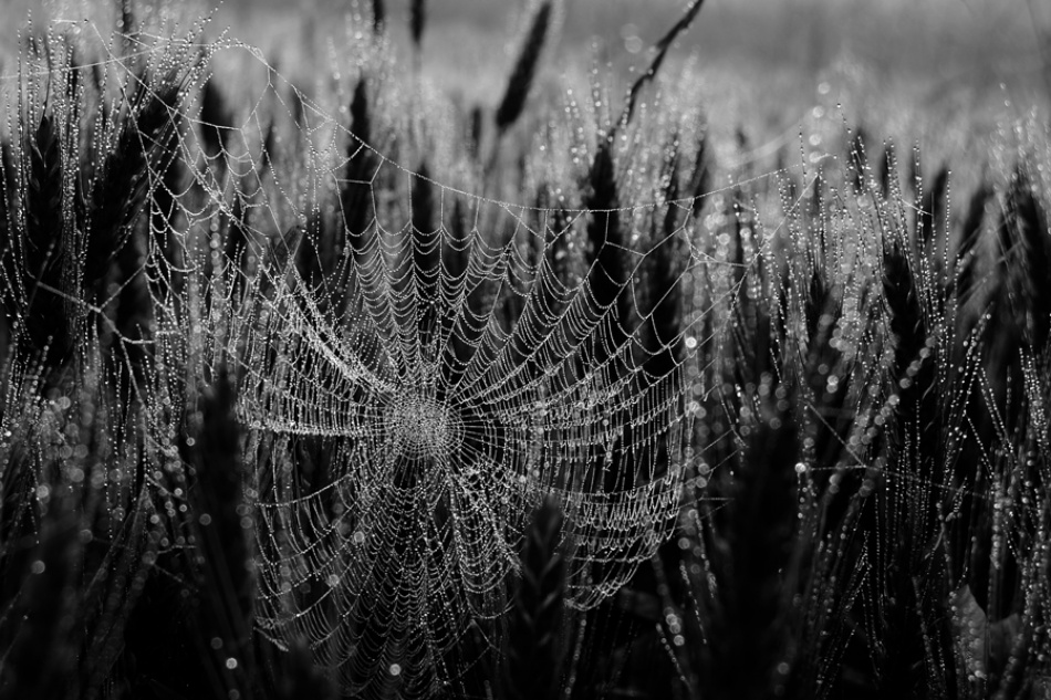 A piece of fine art art photography titled Fragile by Barbara