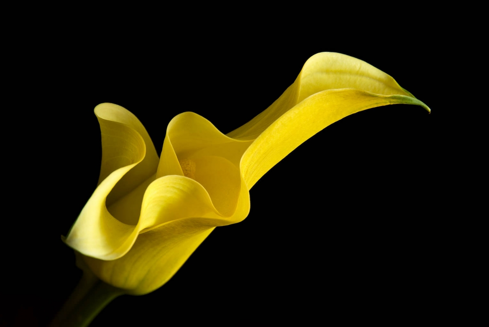 A piece of fine art art photography titled Yellow by prbimages